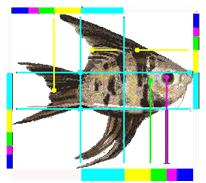 Engelsfisch