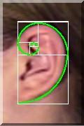 Ohr_Spirale